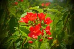 Roter Herb Plant Lizenzfreies Stockfoto