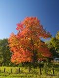 Roter Herbst Stockbild