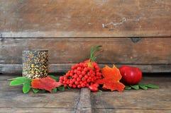 Roter Herbst lizenzfreie stockbilder