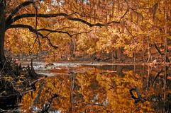 Roter Herbst-Fluss Stockfotos