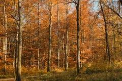 Roter Herbstwald Stockfotografie