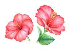 Roter Hibiscus des Aquarells blüht Blätter stock abbildung
