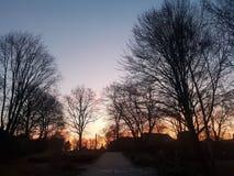 Roter Himmel hinter Bäumen stockbilder