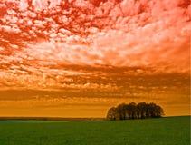 Roter Himmel und Bäume Stockbilder