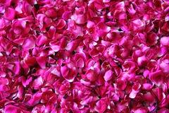 Roter Hintergrund der rosafarbenen Blumenblätter Lizenzfreies Stockbild