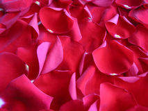 Roter Hintergrund der rosafarbenen Blumenblätter Stockfoto