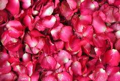 Roter Hintergrund des rosafarbenen Blumenblattes Stockbilder