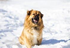 Roter Hund, der auf Schnee sitzt Lizenzfreie Stockfotografie