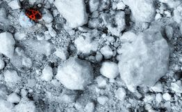 Roter Käfersoldat oder -wanze stockbild