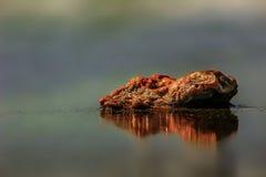 Roter Kalziumstein Stockbild