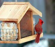Roter Kardinal an einer Zufuhr Lizenzfreie Stockfotos