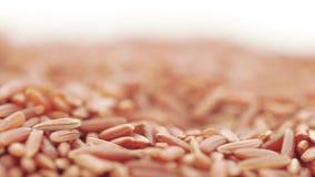 Roter Kern-Reis in der Masse stock video