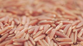 Roter Kern-Reis in der Masse stock footage