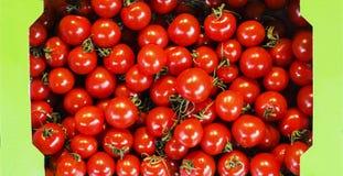 Roter Korb voll von Tomaten Stockbild