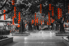 Roter Laternenfall auf Bäumen Stockfotografie
