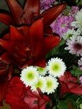 Roter Lilienblumenstrauß Stockbild
