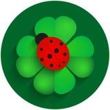 Roter Marienkäfer auf grünem Klee mit Schatten Lizenzfreies Stockfoto