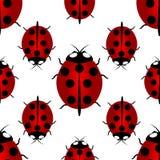 Roter Marienkäfer mit sieben Punkten auf dem zurück- für Glück, nahtloses Muster Endloses Muster des Marienkäfers Lizenzfreies Stockbild
