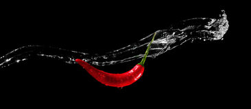 Roter mexikanischer Pfeffer Stockfotografie
