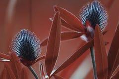 roter mit Blumenhintergrund Blauer Klee der Wildflowers auf einem bokeh Hintergrund Nahaufnahme Weicher Fokus Stockfotografie