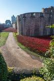 Roter Mohnblumen Tower von London Lizenzfreies Stockfoto