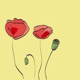 Roter Mohnblumenhintergrund Stockbilder