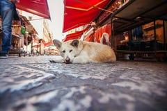Roter obdachloser Hund, der auf dem Marktplatzhintergrund liegt lizenzfreie stockbilder