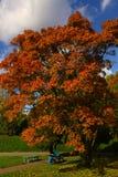 Roter orangefarbener Baum des Herbstes im Park mit Mädchen auf der Bank Lizenzfreies Stockfoto