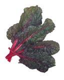Roter organischer Mangold lizenzfreies stockbild