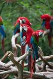 Roter Papagei, der auf Baumkabel steht stockbild