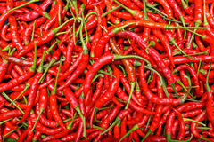 Roter Paprika-Pfeffer Stockfotografie