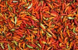 Roter Paprika-Pfeffer Lizenzfreie Stockfotografie