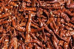 Roter Paprika-Pfeffer Lizenzfreie Stockbilder