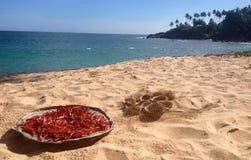 Roter Paprika und Kokosnuss auf dem Strand Stockbild