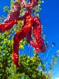 Roter Pfeffer Stockfotografie