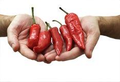 Roter Pfeffer in Hände getrennt Stockfotografie