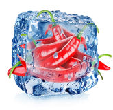 Roter Pfeffer im Eiswürfel Stockbilder