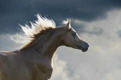 Roter Pferdenläufergalopp auf Wolkenhintergrund Lizenzfreie Stockfotos
