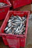 Roter Plastikbehälter, der frische gefangene und verarbeitete Fischmeeresfrüchte Pattani Thailand enthält Stockfotografie