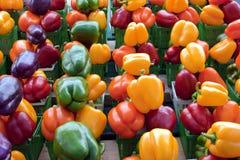 Roter, purpurroter, gelber, grüner und orange grüner Pfeffer Lizenzfreie Stockfotografie