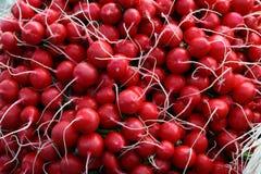 Roter Rettich Stockbild