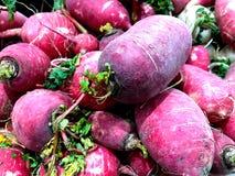Roter Rettich Natürliches Gemüse, natürliche Vitamine Ein lebendes Fragment von einem Obst- und Gemüse Speicher lizenzfreies stockbild