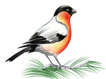 Roter Robin stock abbildung