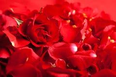 Roter Roseblumenblätter Valentinstag stockfotografie