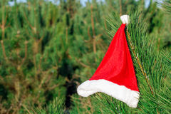 Roter Santa Claus-Hut auf Tannenzweig im Winter parken draußen Lizenzfreies Stockfoto