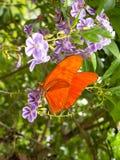 Roter Schmetterling auf purpurroter Blume stockbild