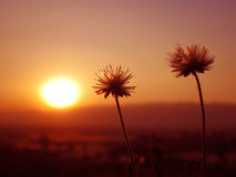 Roter See Myanmar inle Zustand der Sonnenuntergangblume Gebirgs Lizenzfreies Stockbild
