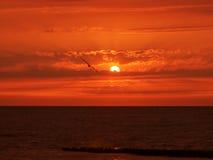 Roter Sommersonnenuntergang Stockfotos