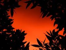 Roter Sonnenaufgang hinter den Baumblättern lizenzfreies stockfoto