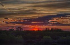 Roter Sonnensonnenuntergang und -bäume Lizenzfreies Stockbild
